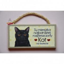 Magnes z kotem - Kot czarny